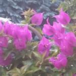 Fotovergleich | Galaxy Note 3 Blumenschau