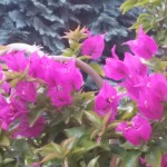 Fotovergleich | Galaxy S5 Blumenschau