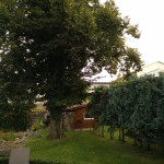 Fotovergleich | OnePlus One Gartenschau
